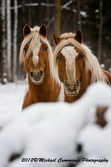 Horse Picture