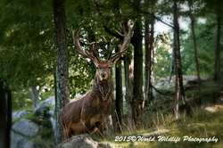 Red Deer Picture